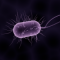 Cum recunosti si previi o toxiinfectie alimentara?